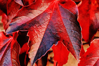 Image of autumn leaves signifying change
